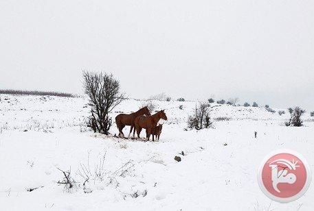 FOTOS , VIDEO: historica nevada en jerusalen israel.