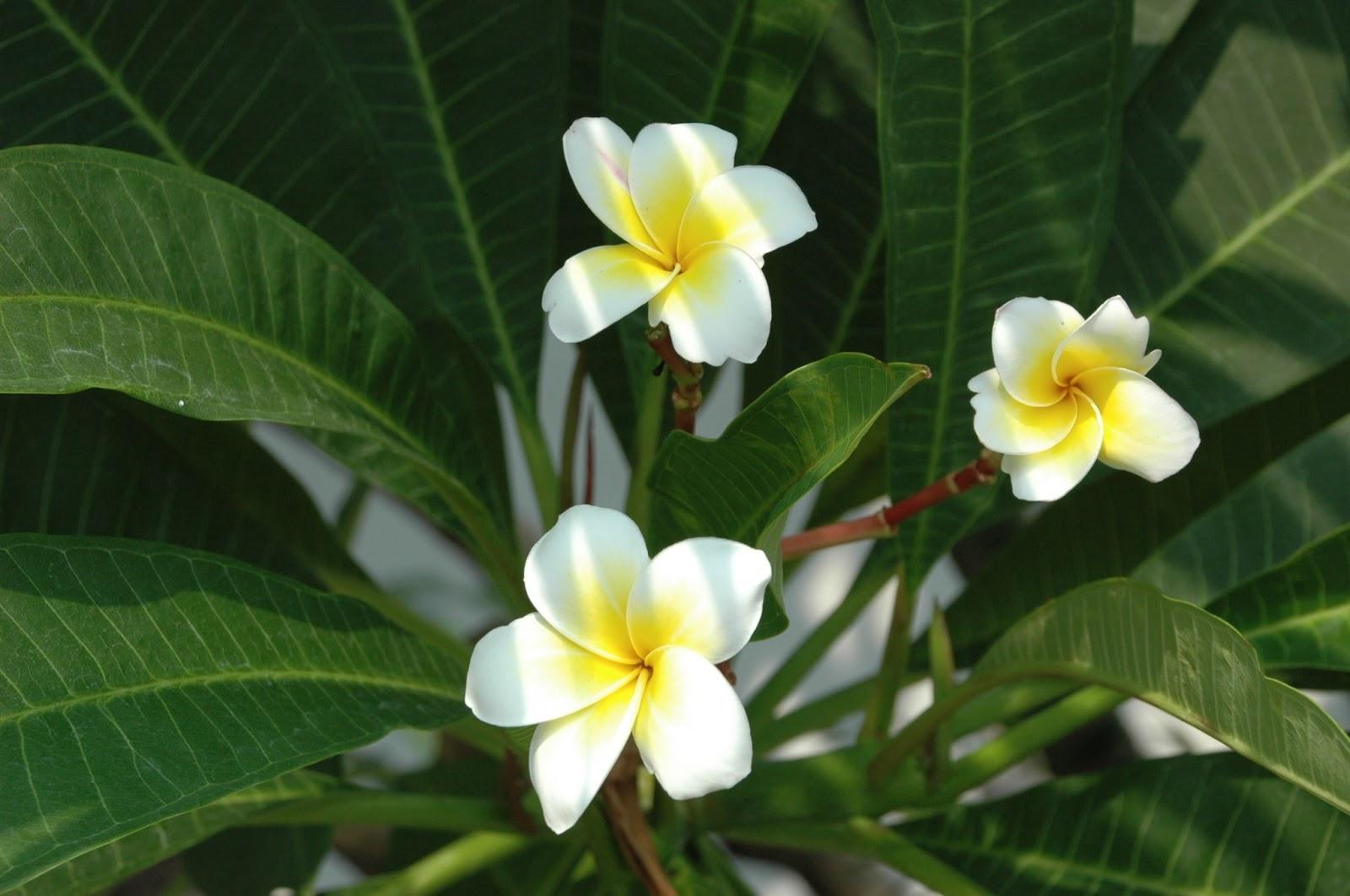 Paleteria Flor De Mayo