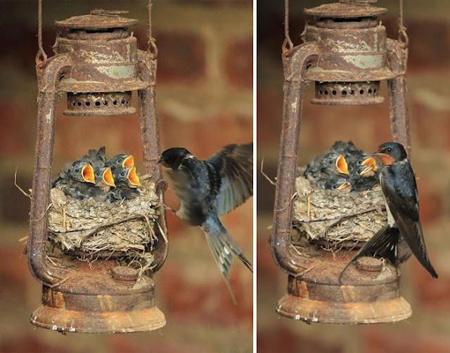 أكثر 30 صورة رائعة للطيور cute-bird-parents-30