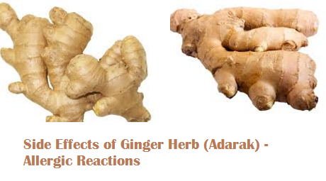 Side Effects of Ginger Herb (Adarak) - Allergic Reactions