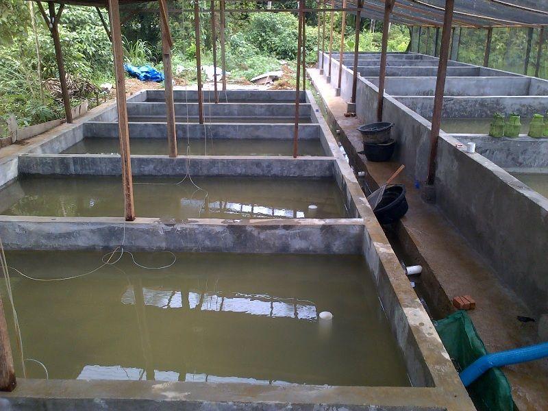 kolam ikan lele modern