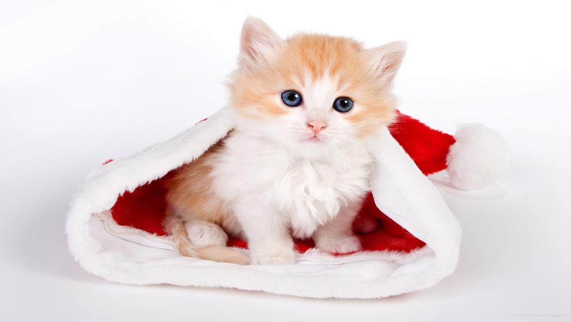 Christmas cat free download cute christmas cat hd - Cute kitten wallpaper free download ...