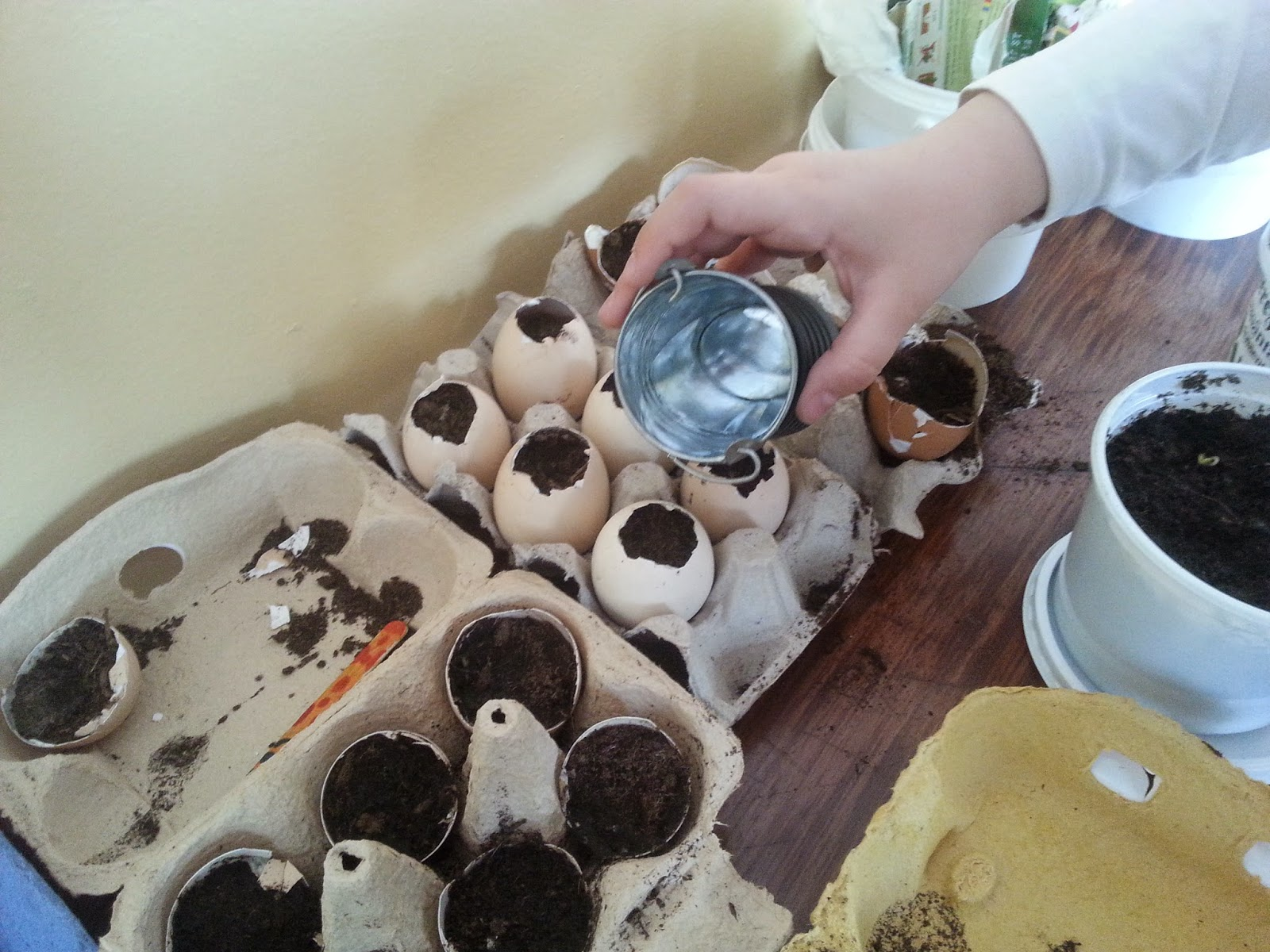 rasaduri in coji de oua