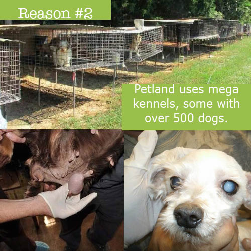 Puppy Mill Awareness Southeast Michigan: Top Ten Reasons Why