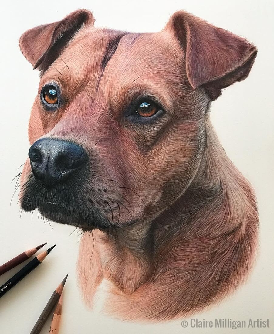 12-Sofia-Claire-Milligan-Realistic-Color-Pencil-Animal-Portraits-www-designstack-co