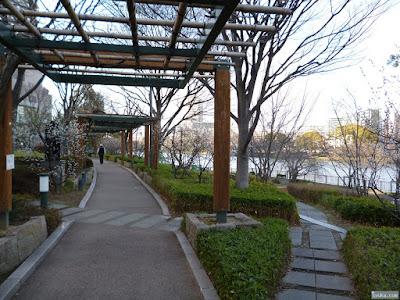 河川敷の梅