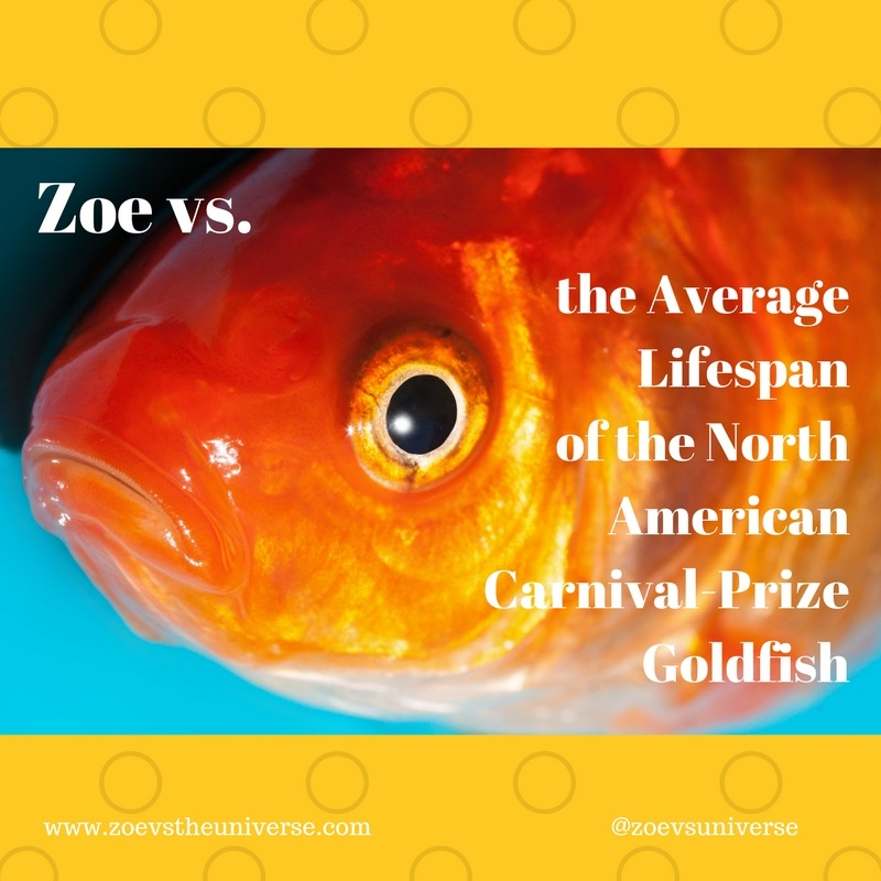 Zoe Vs The Universe Zoe Vs The Average Lifespan Of The North American Carnival Prize Goldfish