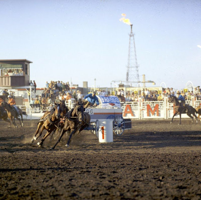 The Calgary Stampede One Of The Largest Outdoor Rodeos In