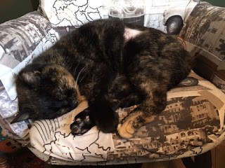 tortoiseshell cat snuggled up on chair