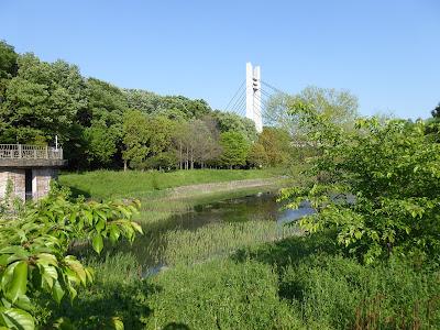 山田池公園の美月橋 ワンド