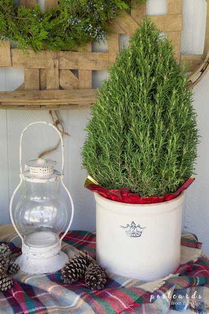 rosemary tree in old ironstone crock on plaid blanket