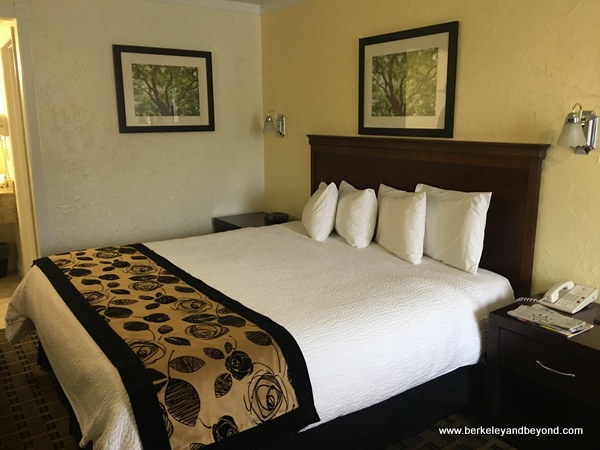 guest room at Baechtel Creek Inn and Spa in Willits, California