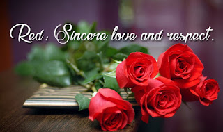 Happy Rose Day 2017 HD Picture