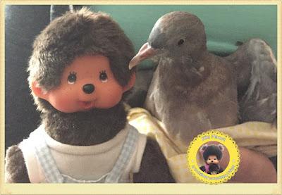 Bubbles le Monchhichi et Colombine le bébé pigeon - oisillon - pigeonneau - oiseau