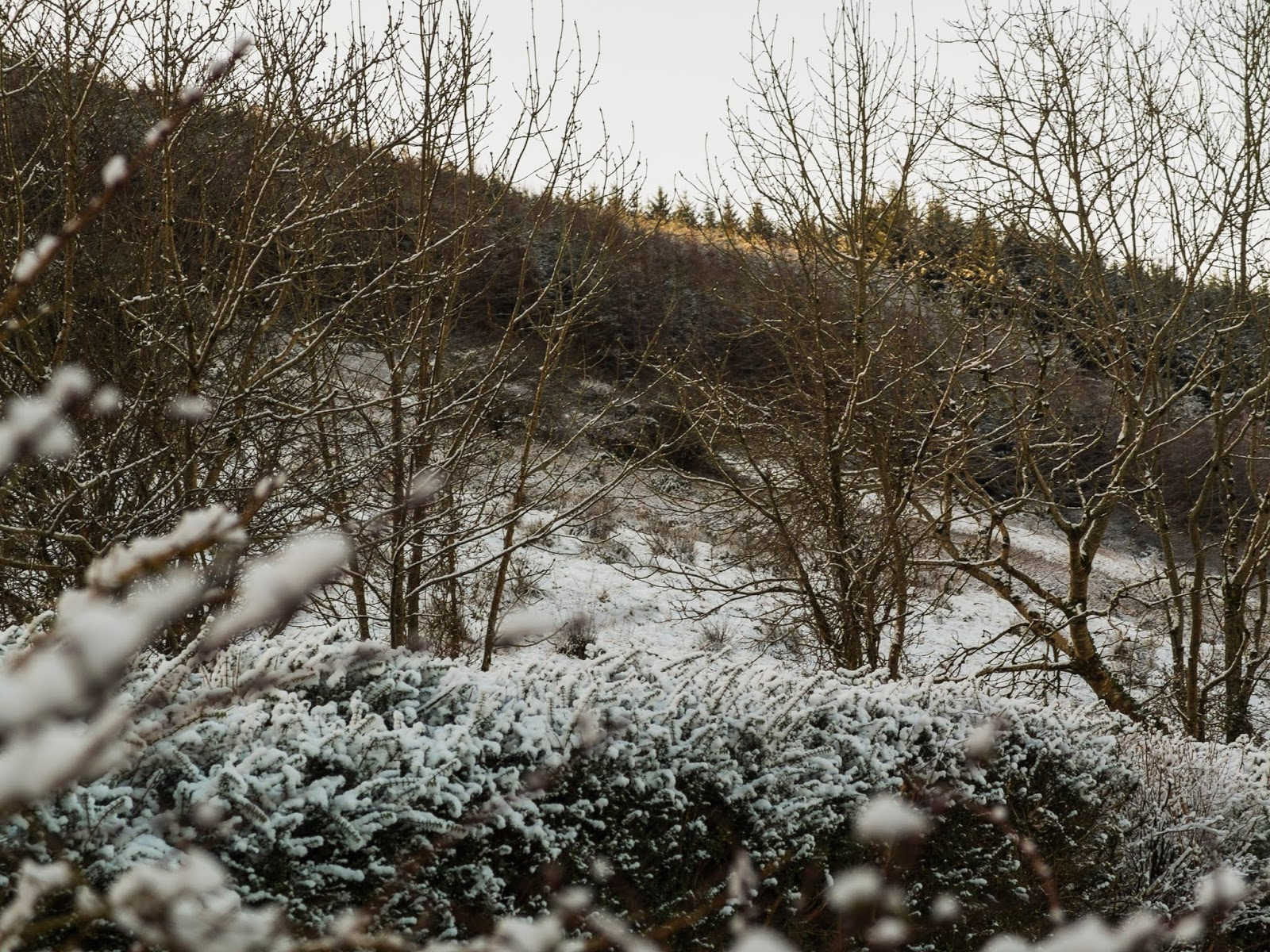 Snow covered fields and hedges on a hillside in the Boggeragh Mountains.