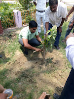 dm-madhubani-planting-tree