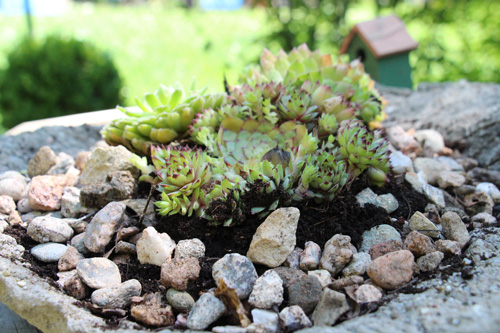 Annette Diepolder, der Atelierladen, Gardening, GArten, Sommer, Steingarten, DIY, Tutorial, Gärtnern, Pflanzen, Betonschale, Outdoor Gardening