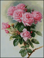 Branch of roses + PM