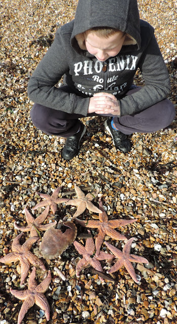 southsea shingle beach dead creatures
