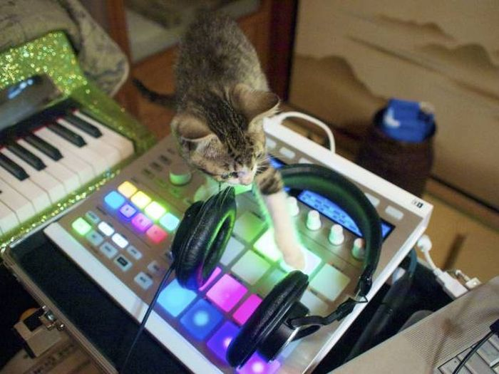 Funny cats - part 316, cute cat picture, funny cat photos