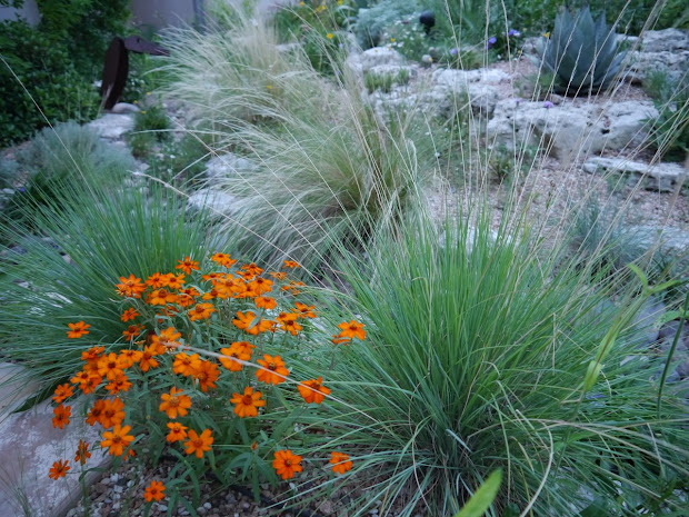 rock rose garden grasses