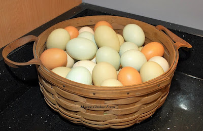 Fresh chickens eggs can be stored on the counter if they are unwashed.