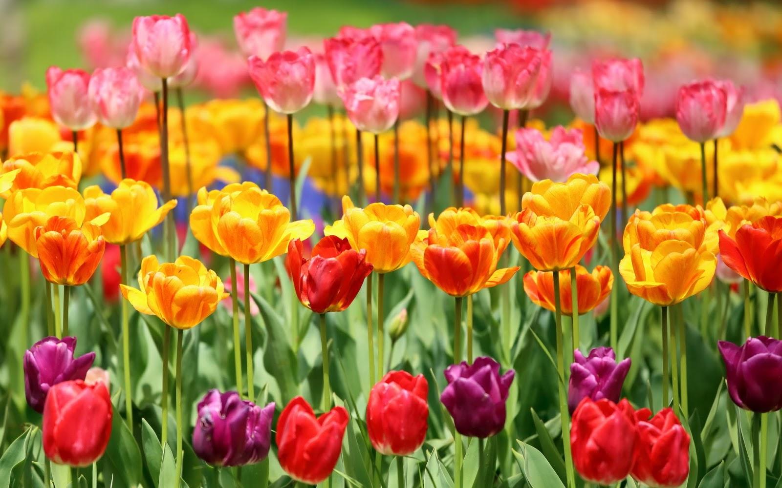 Rosas con brillo - flores hermosas, lindas, hermosas