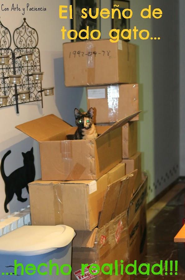 sueño,gato,realidad,afición,cajas,esconderse,meterse,cartón,escondites,jugar,cats,kitties,box,hide,hobby,