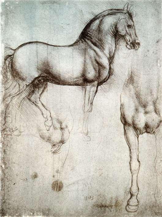 Study of horse (Windsor)