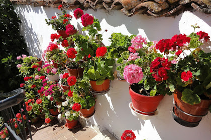 10 Jenis Bunga Hias Gantung Yang Bisa Membuat Ceria Suasana Rumahmu