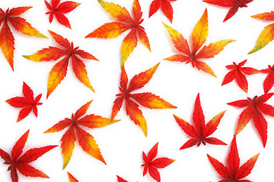 red-autum-leaves-awaysome-imageges