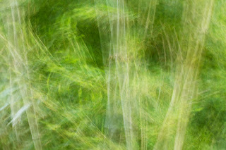 Swirls of green bamboo create the appearance of rustling through a forest in Austin's Zilker Park