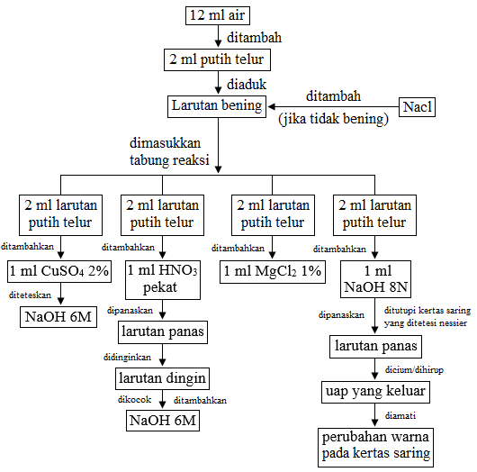 diagram alir uji sifat protein