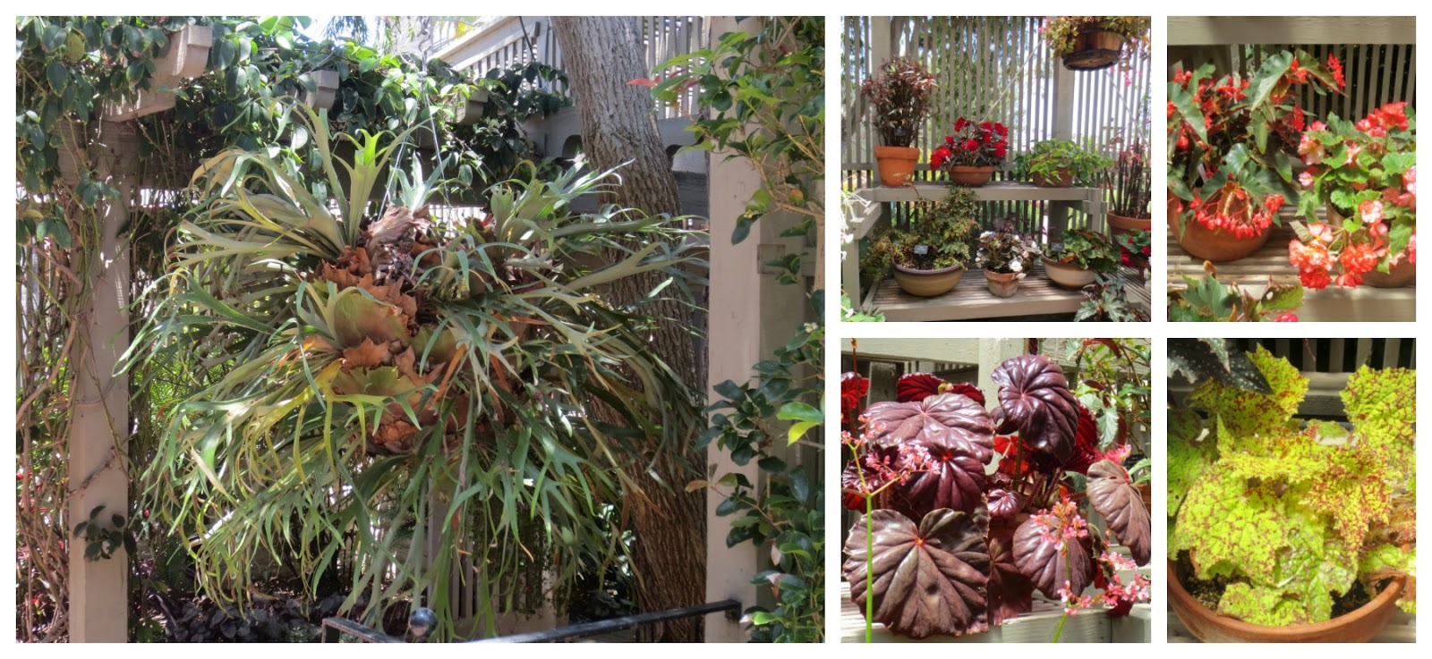 Nice Sherman Gardens Component - Brown Nature Garden ...