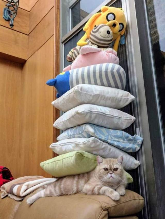 Funny cats - part 319, adorable cat picture, best funny cats