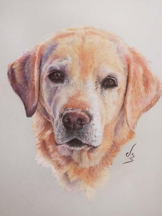 Retrato cuadro a pastel de un perro labrador
