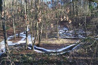 Ein paar Bäche schlängeln sich durch ein Waldstück. An den Ufern liegt Schnee