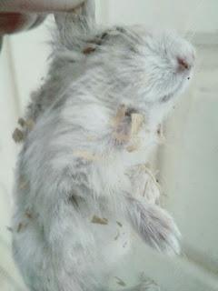 Hamsterku Banyak Yang Mati Gara Gara Makan Kuaci Jajan