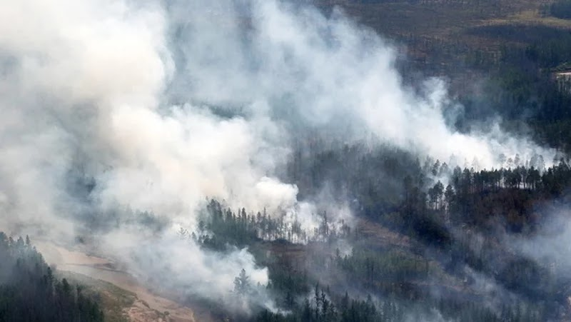 Siberia Forest Fires Could Trigger A Disaster For Arctic