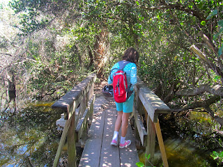 Nature Trails at Shark Valley in the Florida Everglades