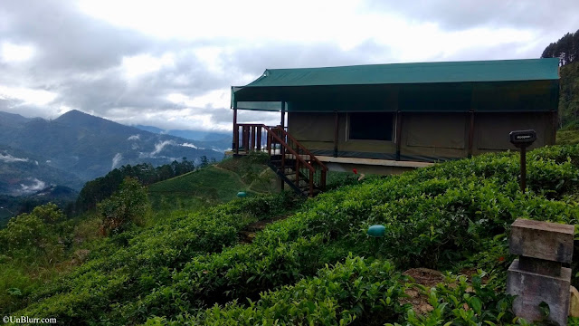 Madulkelle Tea & Eco Lodge, Kandy