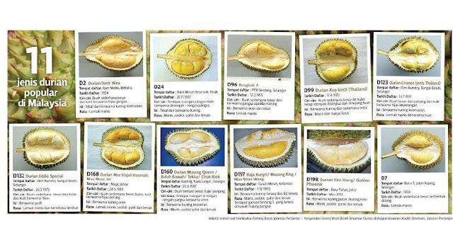 Pahang pengeluar utama durian