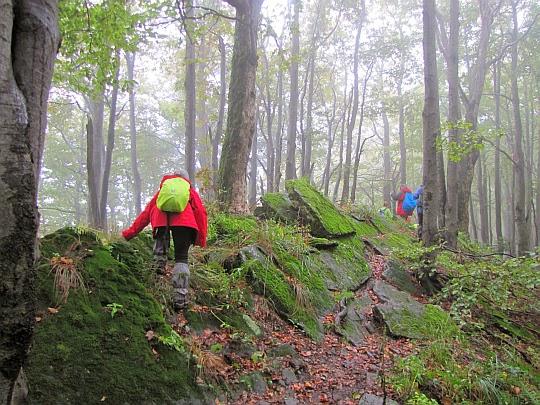 Wychodnie piaskowców ciśniańskich na grzbiecie góry Jaworne