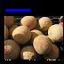 Dưa lưới Athena (Cucumis melo) ,CUC00163