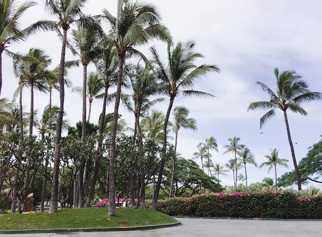 Maui's Hyatt Regency driveway