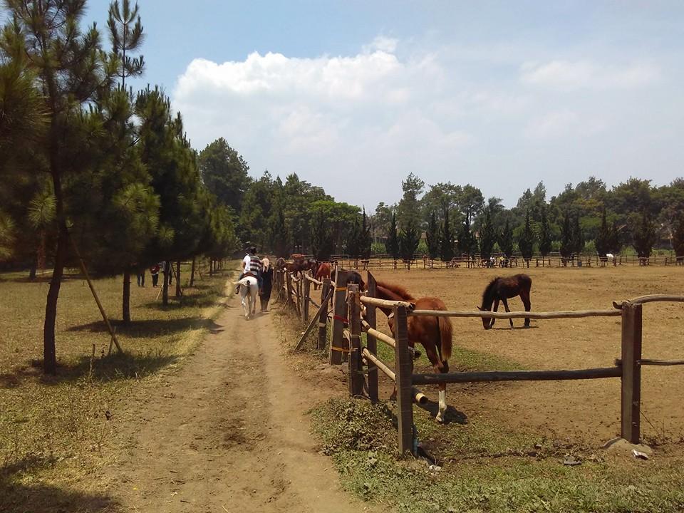 Berkuda di De Ranch Lembang Bandung