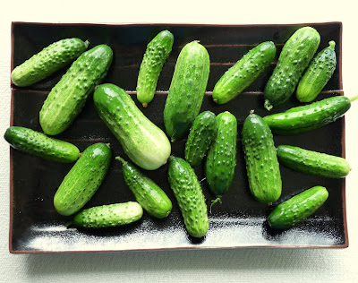Sumter Pickling Cucumbers