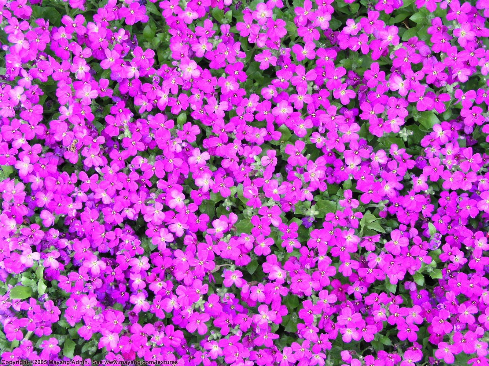 purple wallpaper small - photo #2