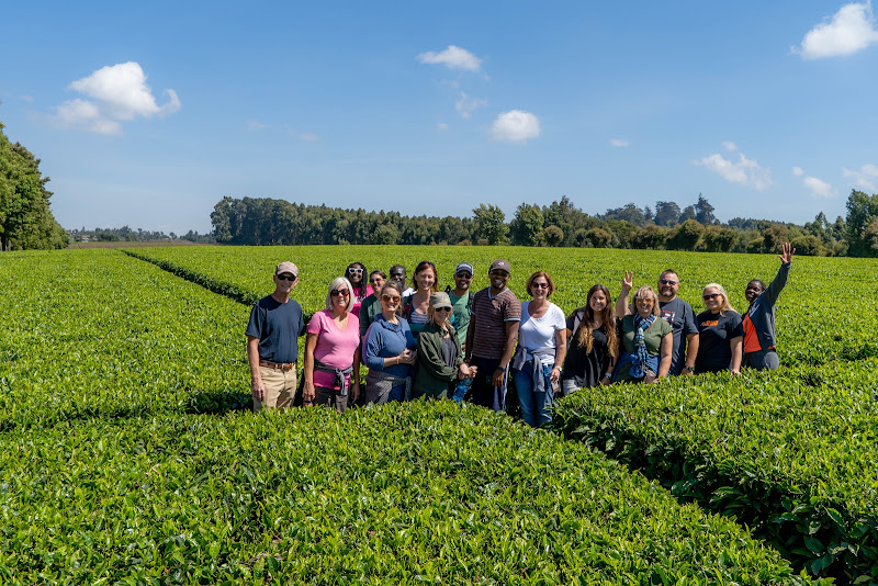 Group Photo in Tea Field Volunteering in Kenya with Freedom Global