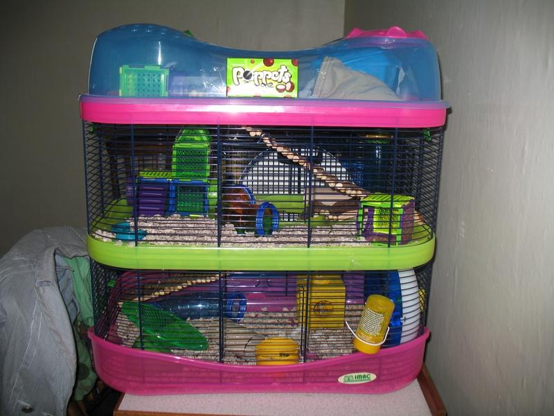 Cute Dwarf Hamster Cages  Cute Dwarf Hams...